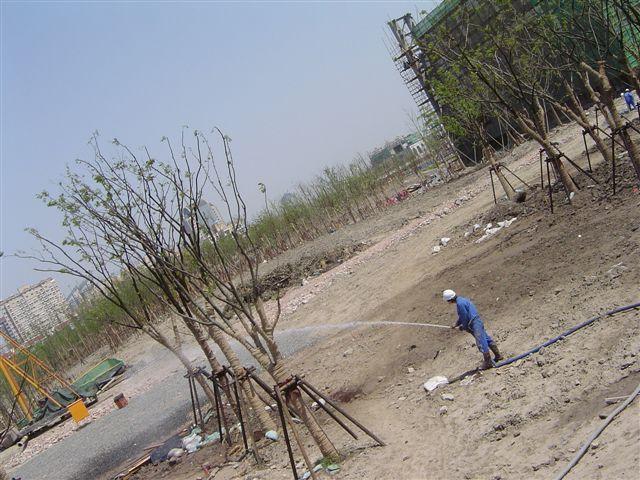 shanghai.beicai-worker-watering.jpg