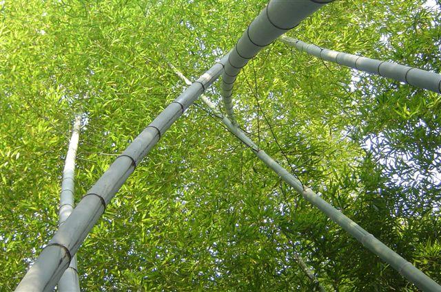 linan-bamboo-leaf.jpg