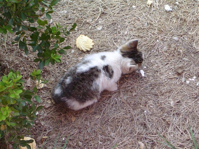 shanghai-baby.cat.jpg