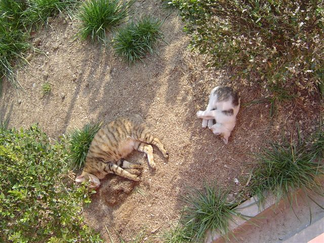 shanghai-two.cats-sleeping.under.sun.jpg