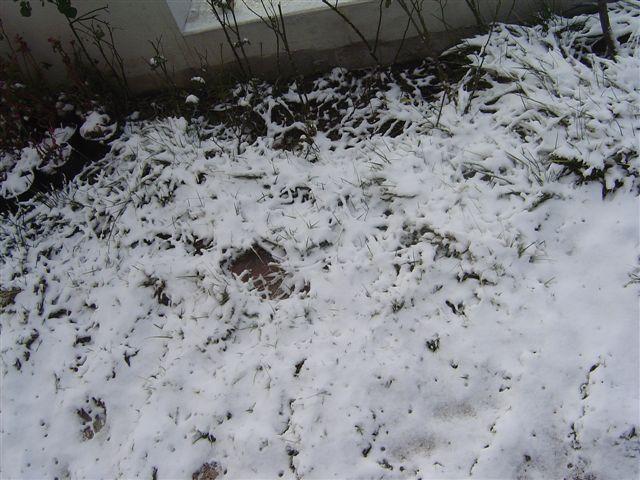 shanghai-snow-details.jpg