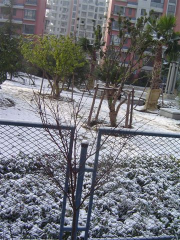 shanghai-snow-outside.jpg