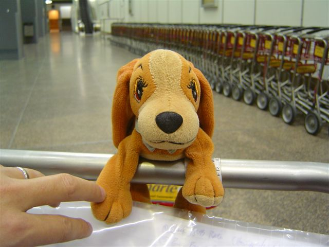 seattle-dog-airport.jpg