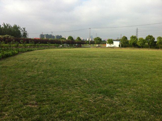shanghai-culture.park-grass.jpg